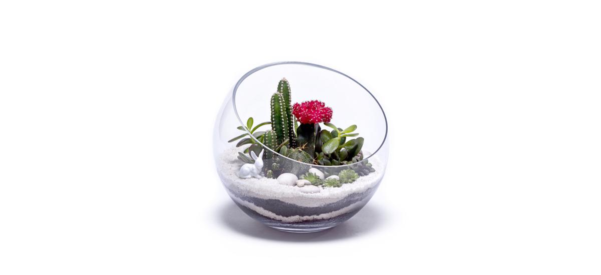 PlantFuture_terrarium